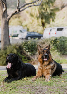 Dogs March 2019 1